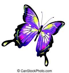 bonito, cor-de-rosa, branca, isolado, borboleta