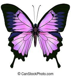 bonito, cor-de-rosa, cor, ilustração, roxo, vetorial, butterfly.