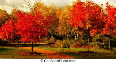 bonito, cor, outono