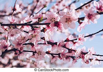 bonito, day., orchard., natureza, flor, primavera, abstratos, árvore, cena, springtime, obscurecido, ensolarado, experiência., flowers., flare., florescer, sol
