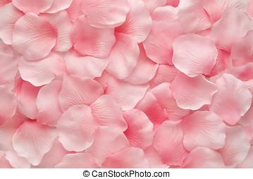 bonito, delicado, cor-de-rosa levantou-se, pétalas