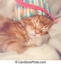 bonito, dormir, vermelho, sólido, maine, coon, gatinhos,...