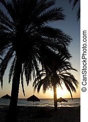 bonito, férias, sunset., praia tropical, com, coqueiros