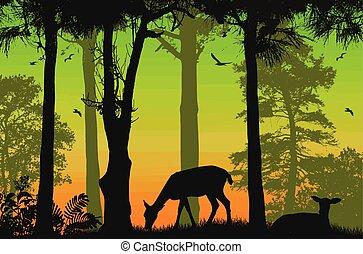 bonito, fauna, poster., deers, silhuetas, pôr do sol, floresta
