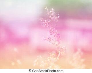 bonito, flor, coloridos, abstratos, experiência., feito, filters., capim, flores, blurry