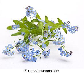 bonito, flores azuis