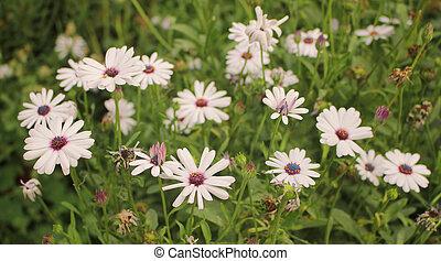 bonito, flores brancas