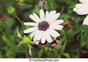 bonito, flores brancas, contra, verde, folheia