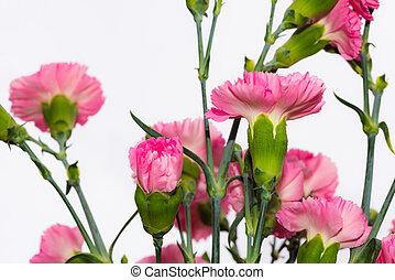 bonito, flores côr-de-rosa, primavera, arranjo, florescer,...