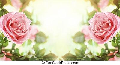 bonito, flores côr-de-rosa, rosas