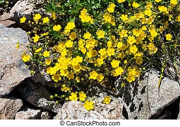 bonito, flores, em, natureza