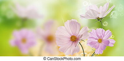 bonito, flores, ligado, abstratos, primavera, natureza, fundo