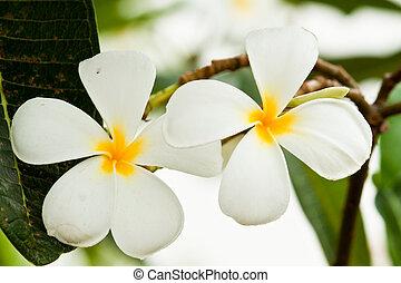 bonito, flores mola