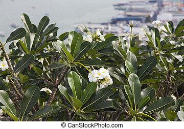 bonito, flores tropicais