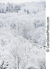 bonito, floresta, inverno, lote, neve