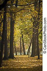 bonito, floresta outono