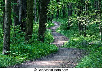 bonito, floresta verde
