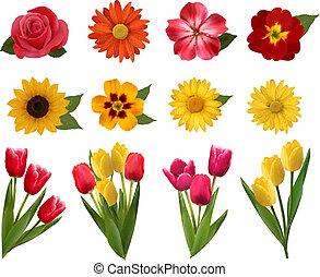 bonito, flowers., jogo, vetorial, ilustração