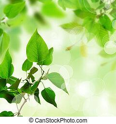 bonito, folhas, verde