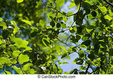 bonito, foliage, fundo