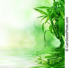 bonito, fresco, bambu