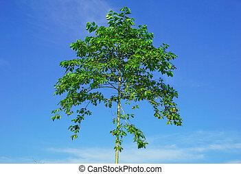 bonito, fundo, árvore, céu, céu, árvores