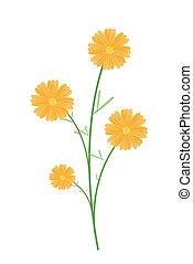 bonito, fundo amarelo, cosmos, flores, branca