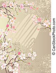 bonito, fundo, com, florescer, cereja, ramos