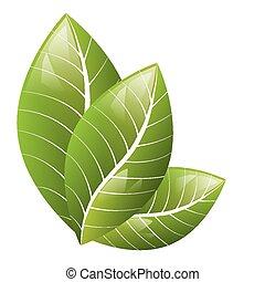 bonito, fundo, folhas, verde, vector., branca