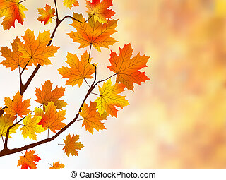 bonito, fundo, maple, leaves.