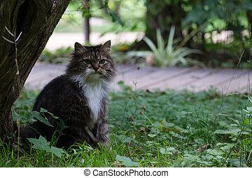 bonito, gato, capim, sentando
