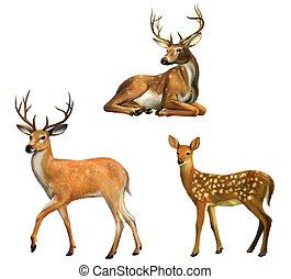 bonito, grande, veado, isolado, deer., bebê, branca, horns.