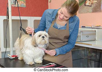 bonito, groomer, loiro, trabalho, cão