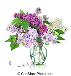 bonito, grupo, lilás, em, a, vaso