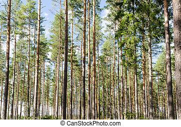 bonito, imagem, floresta, fundo