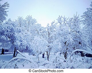 bonito, inverno, dia, em, um, nevado, parque