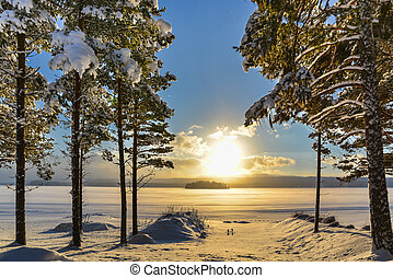 bonito, inverno, quadro, de, suécia, sobre, um, lago, com, árvores pinho, em, a, primeiro plano