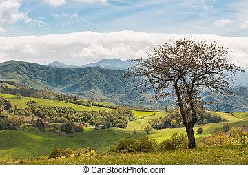 bonito, italiano, campo, paisagem, sobre, colinas rolantes, azul, céu