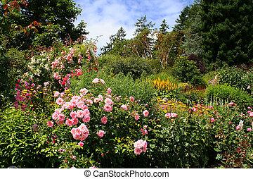 bonito, jardim flor