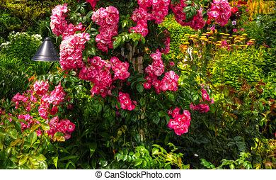 bonito, jardim flor, em, hdr