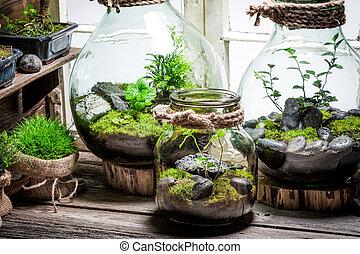 bonito, jarro, com, viver, floresta, com, próprio,...