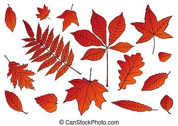 bonito, jogo, 10., illustration., coloridos, folhas, eps, cobrança, outono, experiência., vetorial, branco vermelho