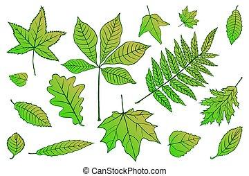 bonito, jogo, 10., illustration., coloridos, folhas, eps, cobrança, outono, vetorial, verde, white.
