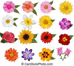 bonito, jogo, coloridos, grande, ilustração, flowers., vetorial