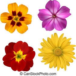 bonito, jogo, illustration., coloridos, grande, flowers., vetorial, desenho, flor, 1.