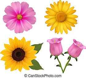 bonito, jogo, illustration., coloridos, grande, flowers., vetorial, desenho, flor, 2.