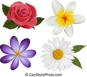bonito, jogo, illustration., coloridos, grande, flowers., vetorial, desenho, flor, 3.