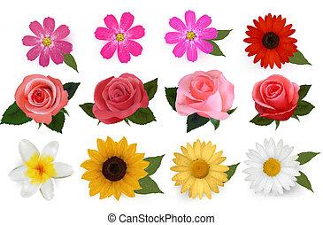 bonito, jogo, illustration., coloridos, grande, flowers., vetorial