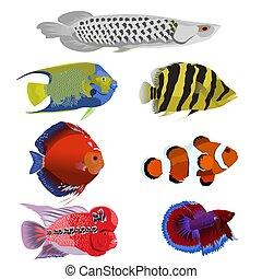 bonito, jogo, peixe, vetorial, fundo, branca