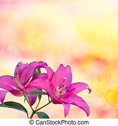 bonito, lírio cor-de-rosa